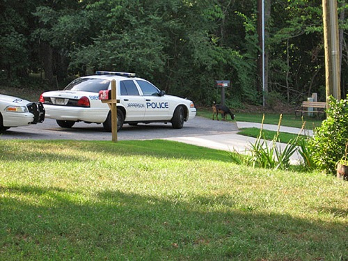 """""""Car 11, this is Dispatch. Nuisance animals at large. Proceed to Forest Street and impound."""""""