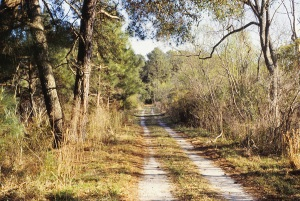 Most roads on Sapelo Island are like this.