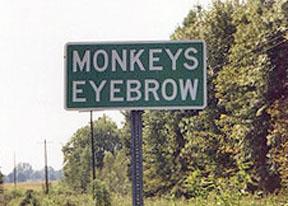 Monkeys Eyebrow