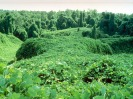 Embrace the Kudzu