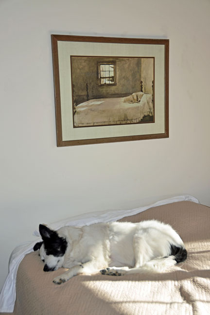 "My dog Paco, grabbing a few mid-morning z's. The print is ""Master Bedroom"" by Andrew Wyeth."