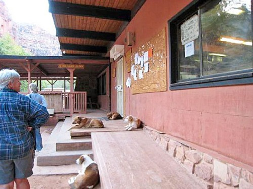 Village mutts lounging outside the cafe.