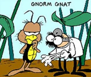 Gnorm Gnat