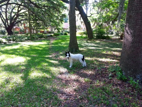 Paco at Juliette Low Park, which is within sight of Betty's house. In the fall, the Gordonston Association will plant a Betty Smith memorial tree.