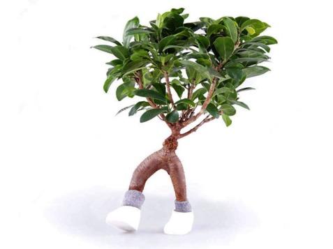 Walking plant