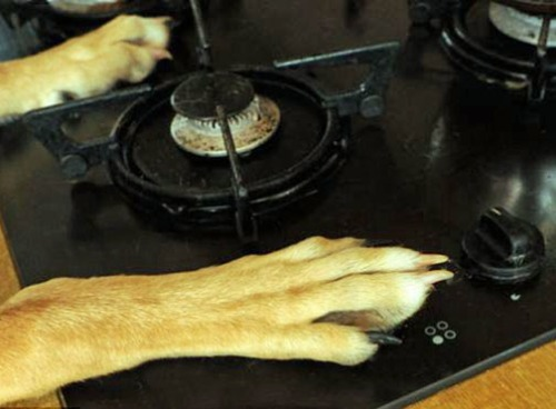 Dog & stove