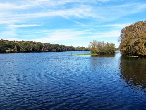 This far south, the Suwannee River is slow and wide. The clear spring water quickly blends into the tea-colored river.
