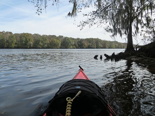 Way down upon the Suwannee River.