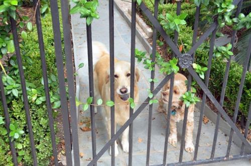 NOLA dogs