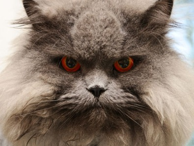 Cat angry