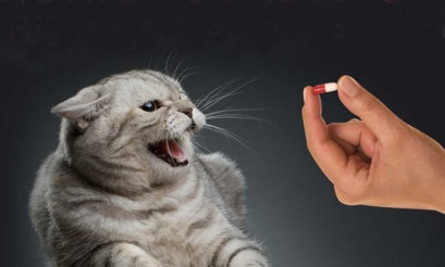 Cat vs. pill