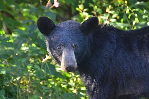 Bear-2